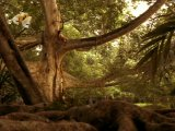 The Second Jungle Book:Mowgli & Baloo/Вторая книга джунглей.Маугли и Балу-1997
